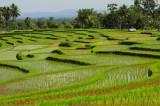 les rizieres