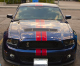 Shelby front.jpg