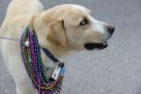 0001ab: 2011 Navarre Beach Mardi Gras Parade