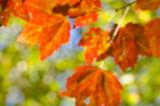 Maine North Woods in Autumn