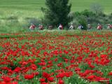 rojo,verde y bicicletas