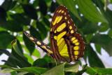 Papillons en liberté