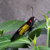 Papillons en liberté 2012