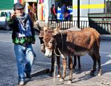 Donkey's Milk for Sale