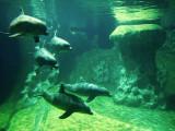 Five Bottlenose Dolphins