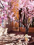 Prayer Tree