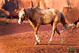 Navaho Horse