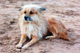 Sand Hound