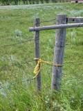 Fences 1745