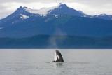 Killer Whales Juneaut0008.jpg