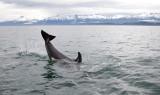 Killer Whales Juneaut0005.jpg