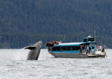 Humpback Whales Juneaut0012.jpg