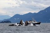 Humpback Whales Juneaut0007.jpg