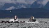 Humpback Whales Juneaut0006.jpg