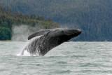 Whales in Juneau Alaska