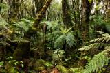 Rainforest02.jpg
