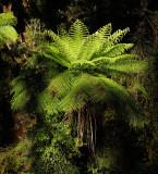 a Ferns 2.jpg