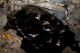 Pternotus cave exit02.jpg