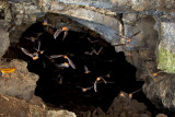 Pternotus cave exit01.jpg