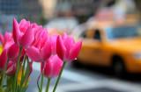 NYC APR2011 (38).jpg