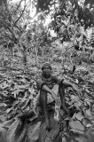 Cocoa Farmer Sulawesi