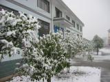 Snowing at Fenshui Hangzhou Tunglu China