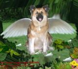 Doggy Angel BROWN