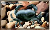 Crab's Complaint