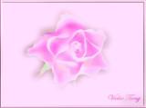Illusional Rose