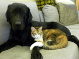 Moca and  Mimi