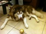My ball has good ears