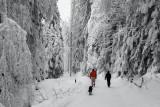 A winter fary ...