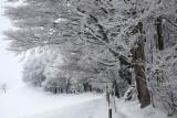 Winter way ...