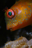 Peixe Detalhe