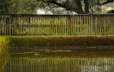 Pond Fence Reflections