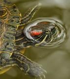 Close Up Turtle Face