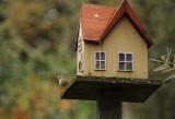 House Wren Lookout
