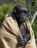 Chimp Yoda