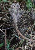 Unusual Unknown Plant