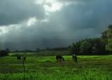 Horses and Sun Rays