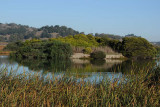 The Pond Island