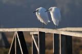Two Snowys on the Bridge
