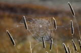 Web Weed Pods