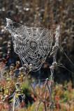 Sling Shot Web