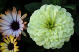 Yellowish Green Blossom