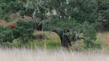 Mossy Tree & Grasses