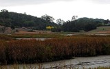 Marsh and Gold Trees