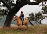 Horseman Under Tree