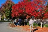 Paul & Orange Trees