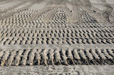 Dirt Patterns